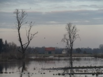 Gent 11.01.2013 048