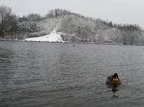gent sneeuw 15.01-2013 021
